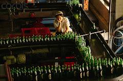 Proceso Cerveza