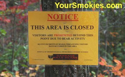 Little Greenbrier School hiking trail closed due to aggressive black bear Great Smoky Mountains National Park