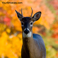 wildlife sightings in the Great Smoky Mountains national park