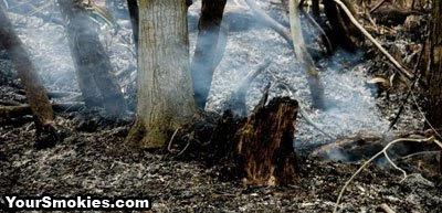 Laurel Falls wild fire current fire behavior