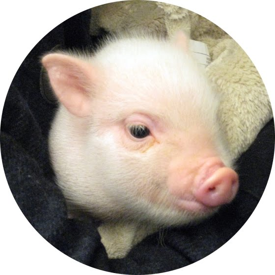 IF YOU KNEW ME YOU WOULD SEE THAT I LOOK LIKE THIS PIGGY!