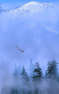 Eagle Flight over Mountain Trees in Mist