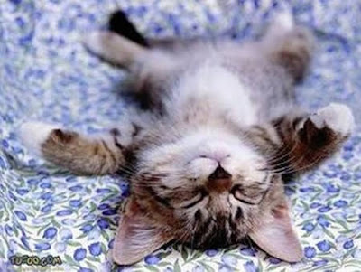 Cute and funny animal sleeping positions amusing stuff