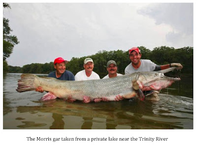 Texas Cryptid Hunter How Big Is The World Record Gar
