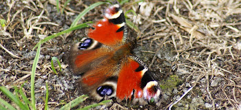 Vlinders en Rupsen - H.B