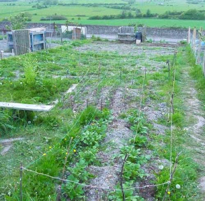 Fully planted allotment at Earwig Corner, Lewes, UK