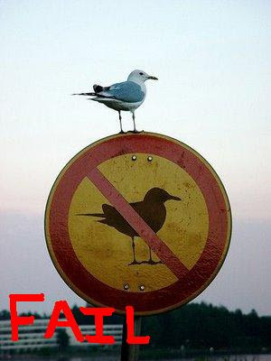 Bird fail
