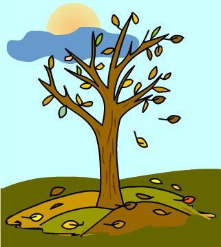 La naturaleza y el ni o rboles de hoja caduca for Ejemplos de arboles de hoja perenne