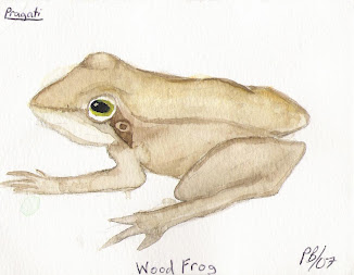 Froggies of the Wetland