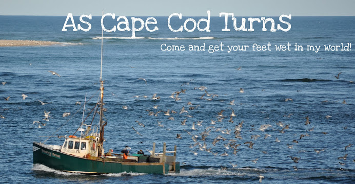 As Cape Cod Turns