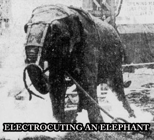 ELECTROCUTING AN ELEPHANT