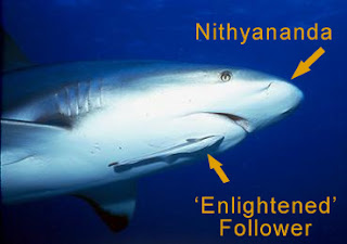 Nithyananda Followers attach themselves to Nithyananda's body like a remora attaches itself to a shark.