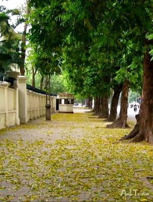 golden Javatuan, Hanoi
