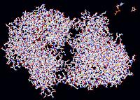 enzyme hexokinase