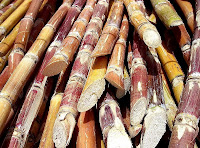 cut sugarcane