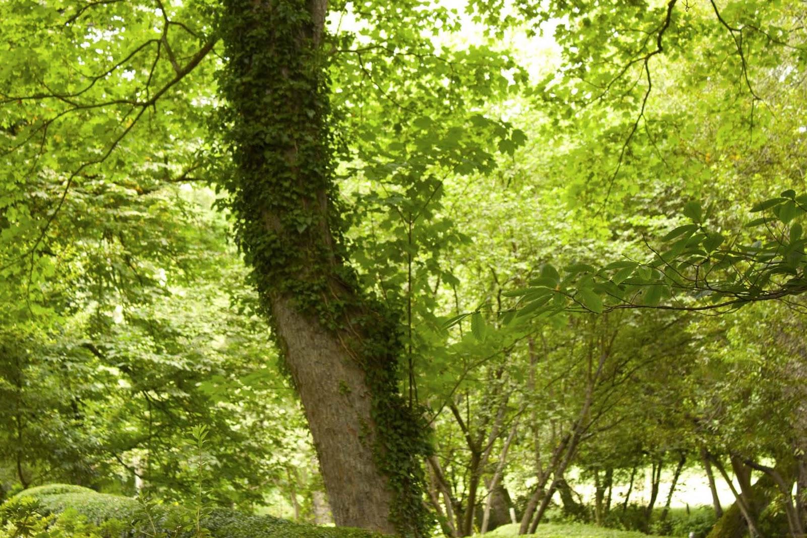 Alicia asuncion jard n botanico de gij n 2 for Jardin urbano gijon