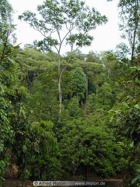 The temperate rainforest