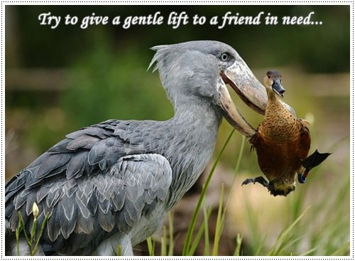 thoughts -try to give a gentle lift to a friend in need