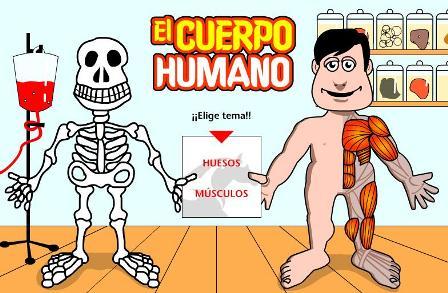 cuerpo humano organos. images cuerpo humano organos.