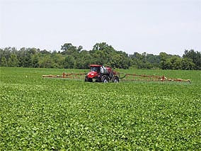 soybean farms