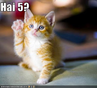 funny cat picture high five image