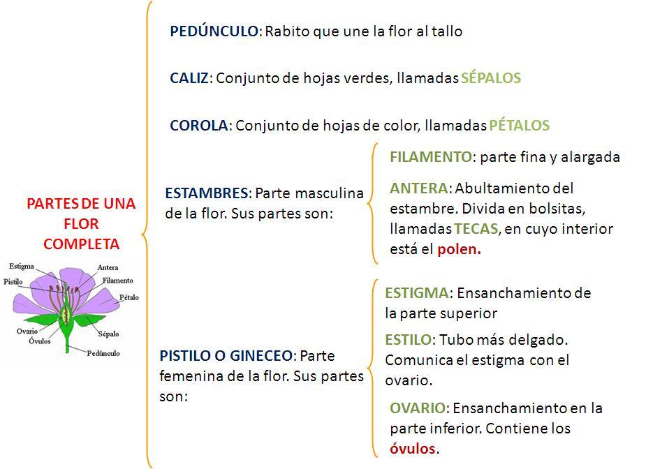 Blog Bilingüe del CEIP Pino Flores: PLANTS