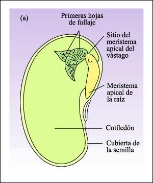 Ceip miguel de cervantes unidad 2 el reino de las plantas 5 de primaria - Semillas de interior ...