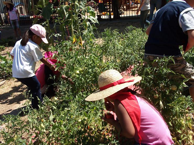 SFBFS Organic Gardeners