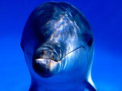 dolphin profile