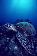 sea floor turtle
