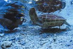 turtle encounter