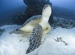 sandy turtle under