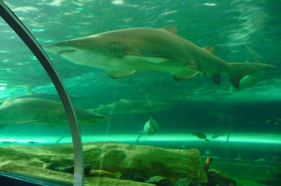El Aquarium de Sydney en Darling Harbour