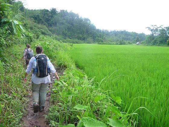Así era el sendero yendo hacia la Gibbon Experience