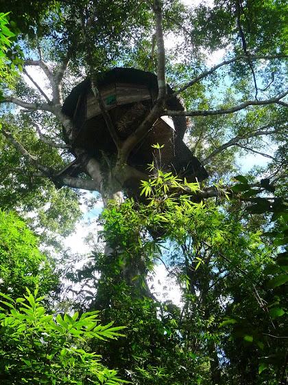 Así se ve desde abajo la casa de árbol acá en Laos, increíble