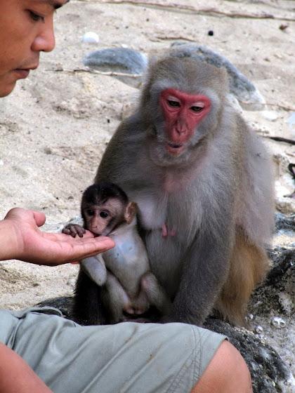 Uno de los monos