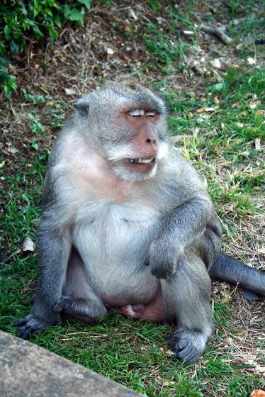 Un mono en Indonesia