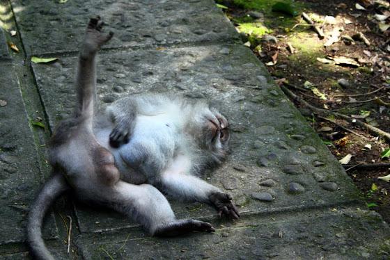Un mono de Ubud