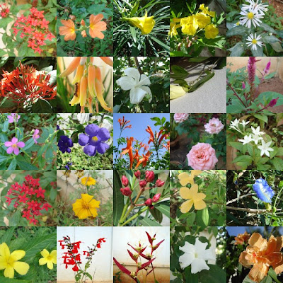 types of flowers identifying different types of flowers