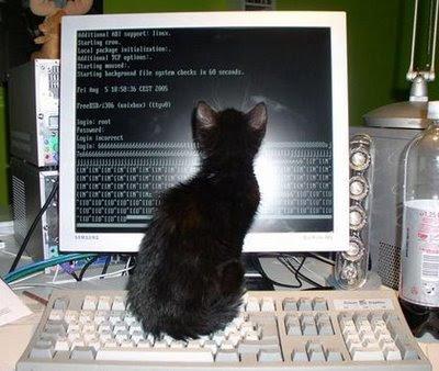 cat in computer