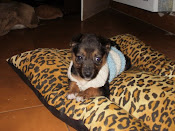 PANCHA EN ADOPCIN