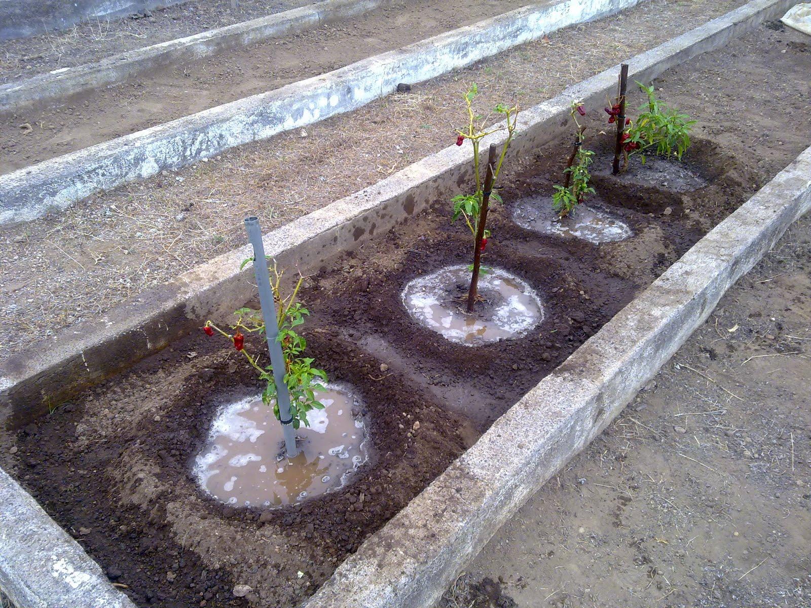Curso auxiliar jardineria agosto 2010 for Auxiliar jardineria