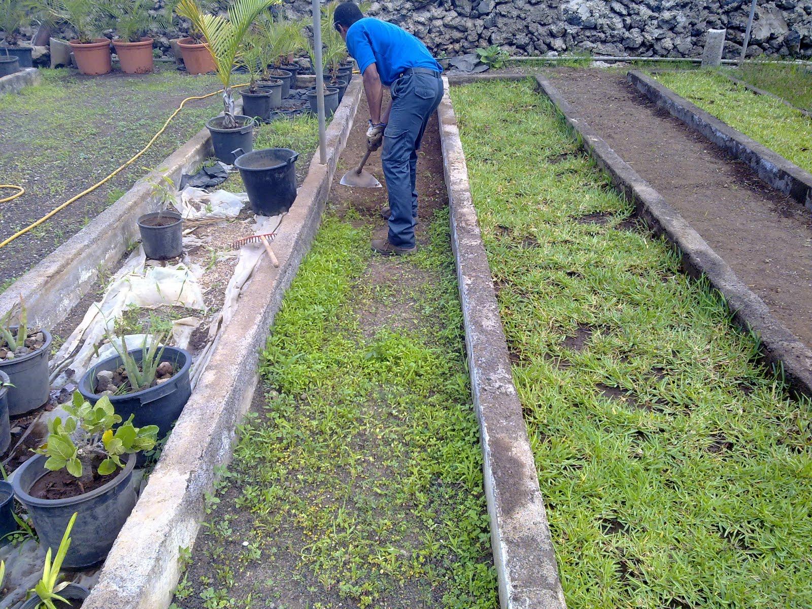 Curso auxiliar jardineria mantenimiento de los pasillos for Auxiliar jardineria