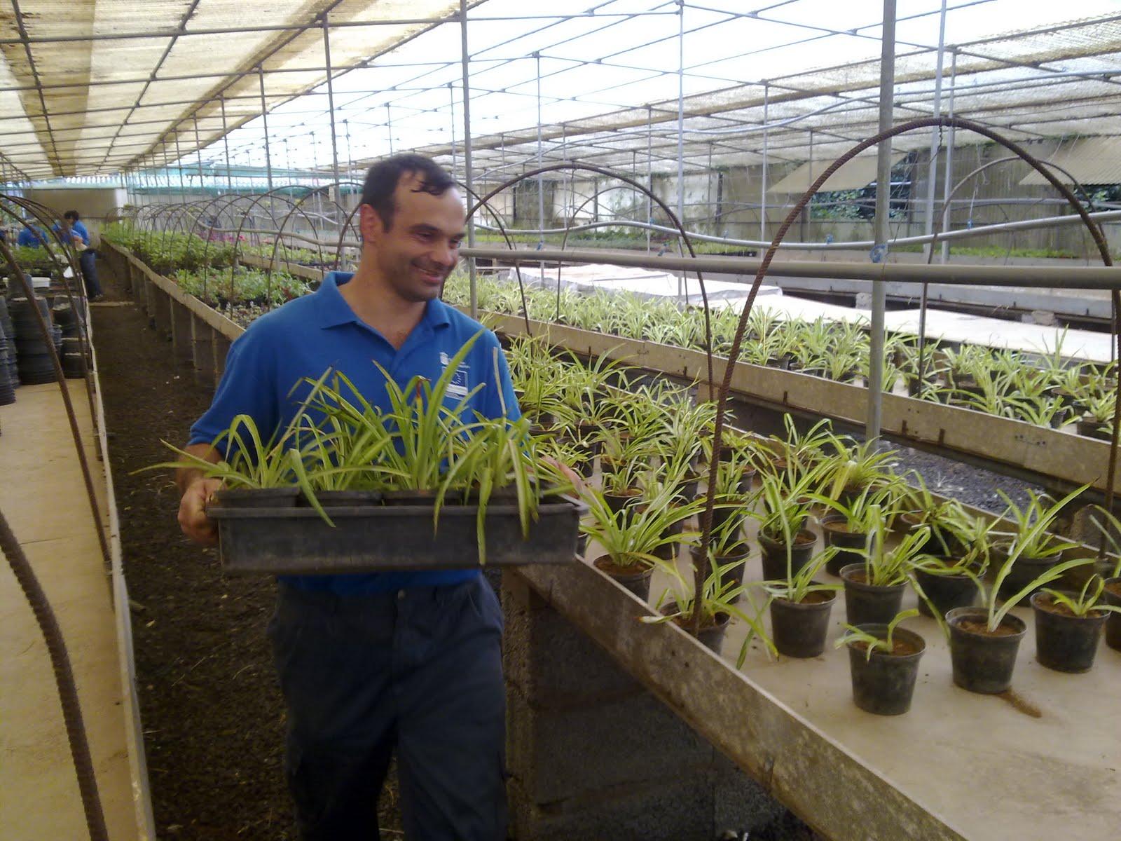 curso auxiliar jardineria trasplantes vivero