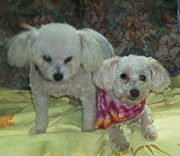 Teddy & Rosie
