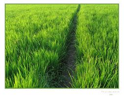 طريقك اخضر