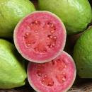 Jus Pink Guava
