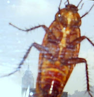 Image of a cockroach climbing a building