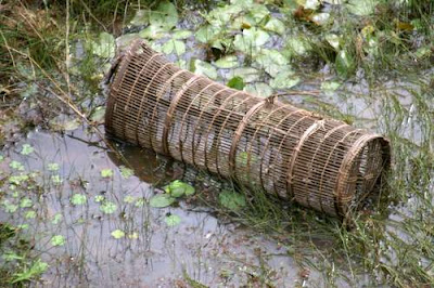 Image of a partially submerged, traditional fish-trap in a moat in Cambodia.