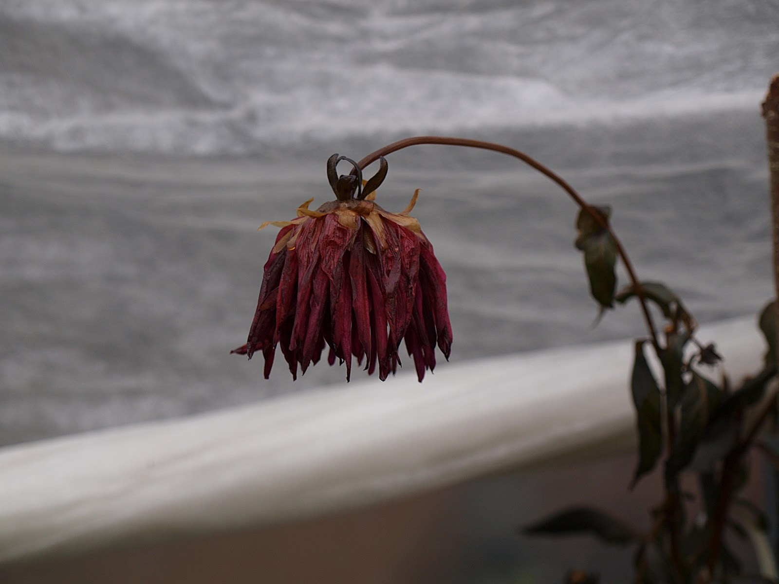 how to explain a dying flower
